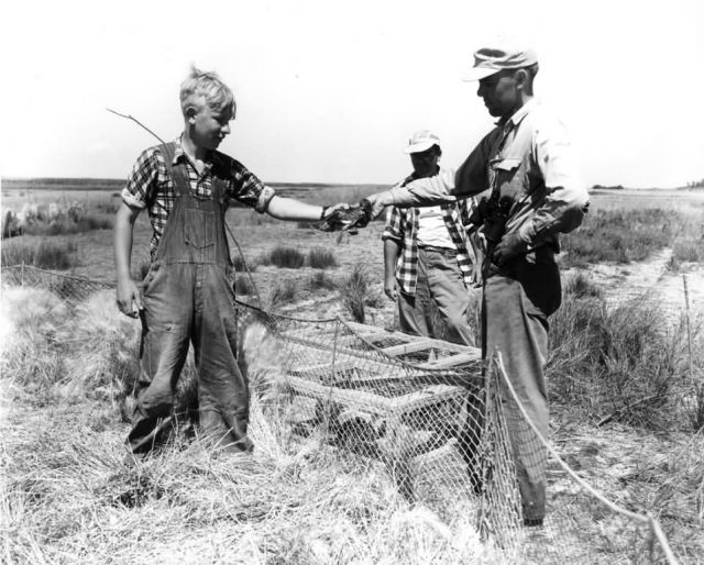 FWS2125 Waterfowl Survey (1951) Picture