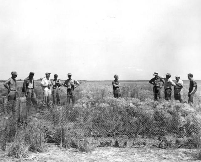 FWS2122 Waterfowl Survey (1951) Picture