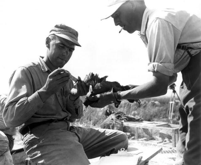 FWS2133 Waterfowl Survey (1951) Picture