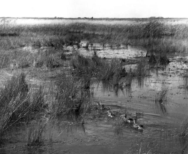 FWS2136 Waterfowl Survey (1951) Picture