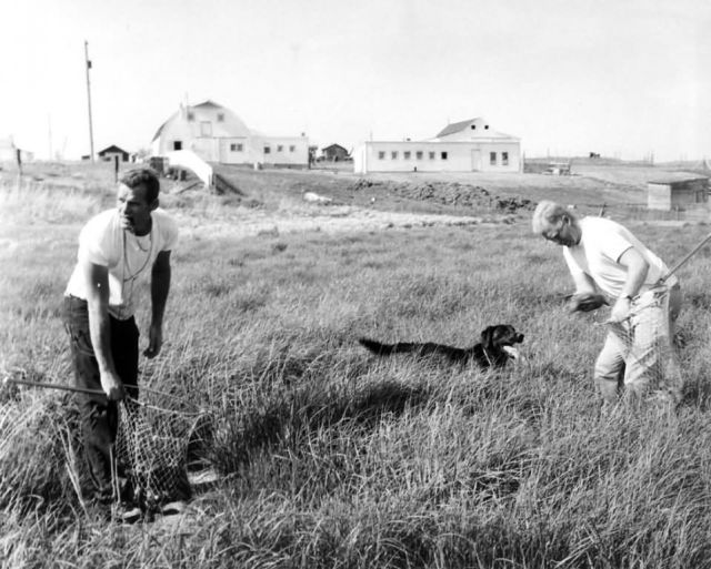 FWS3913 Waterfowl Survey (1957) Picture