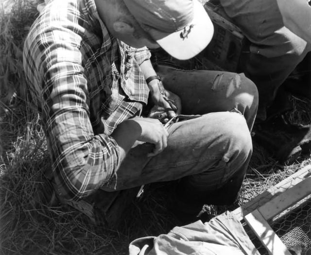 FWS2130 Waterfowl Survey (1957) Picture