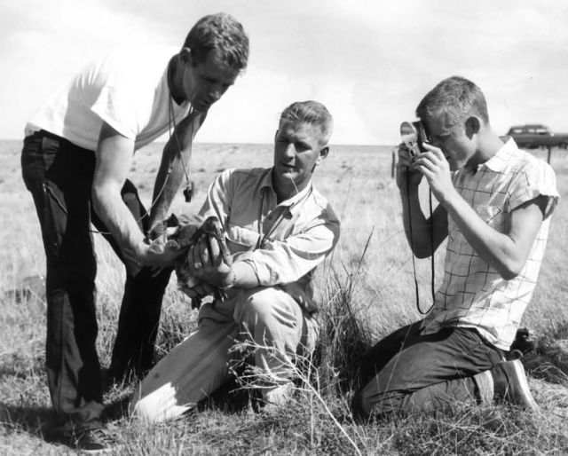 FWS3908 Waterfowl Survey (1957) Picture