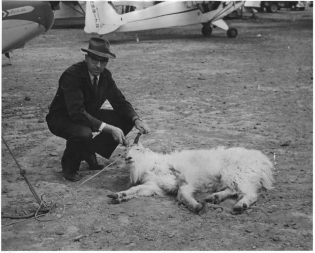 Edward Chatelain and Mountain Goat Picture