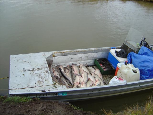 Subsistence catch at Whitefish Lake Picture