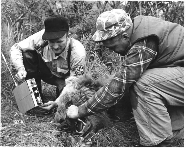 Biologists and Bear on Kodiak Picture