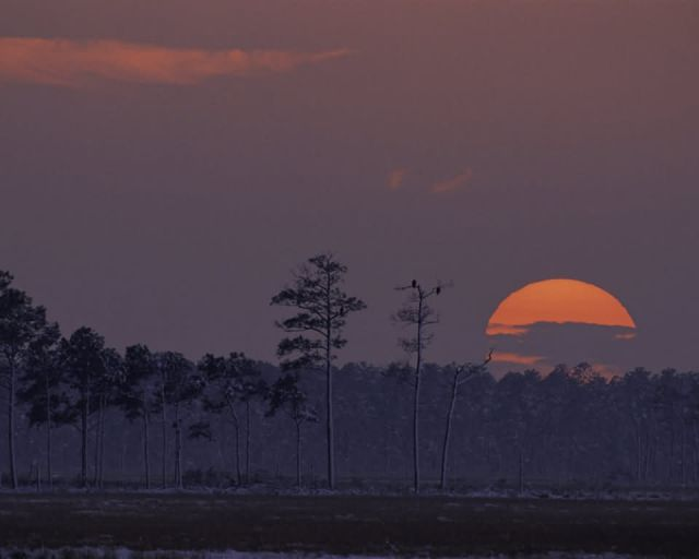 Blackwater National Wildlife Refuge Picture