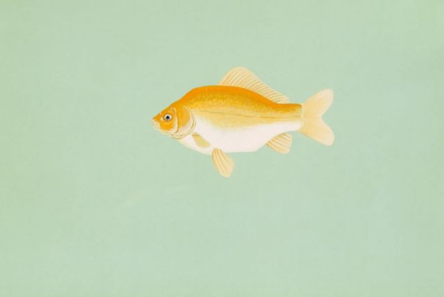 Goldfish Picture