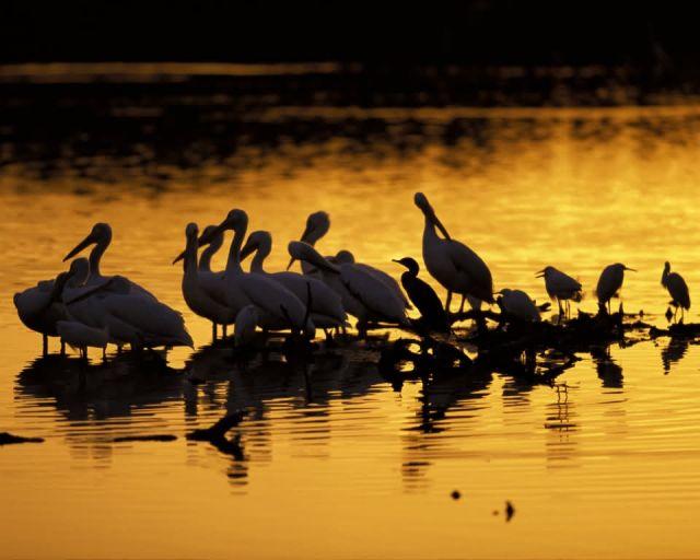J. N. Ding Darling National Wildlife Refuge Picture