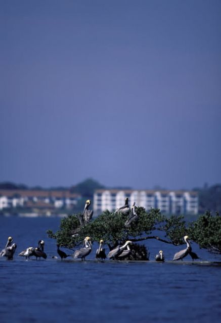 Pelican Island National Wildlife Refuge Picture