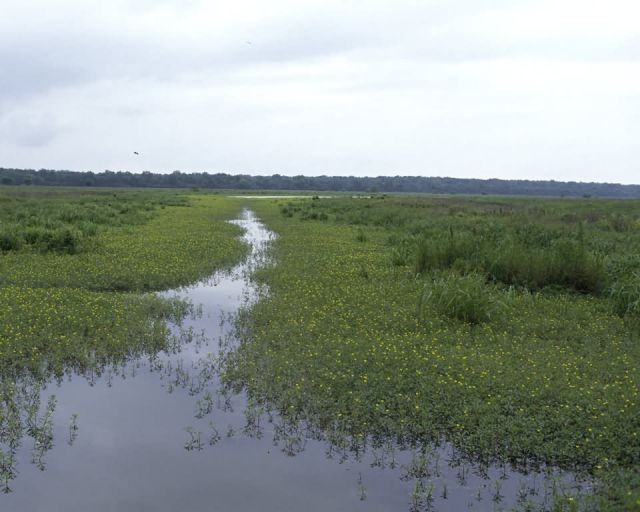 Tensas River National Wildlife Refuge Picture