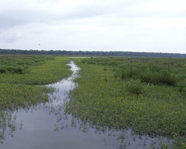 Tensas River National Wildlife Refuge Picture