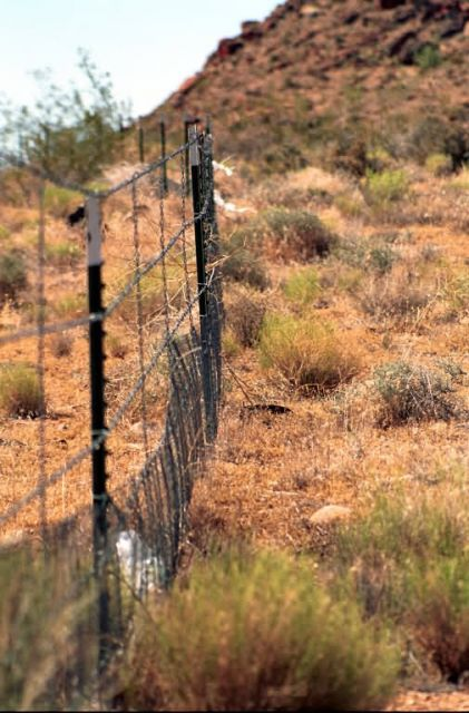 Protective Fencing for Desert Tortoise Habitat Picture