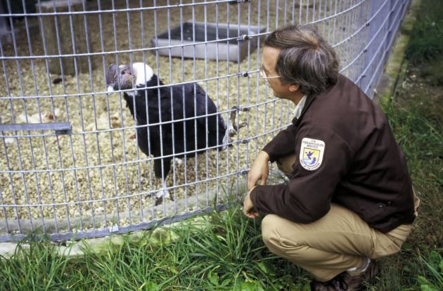 FWS Biologist with Condor Picture