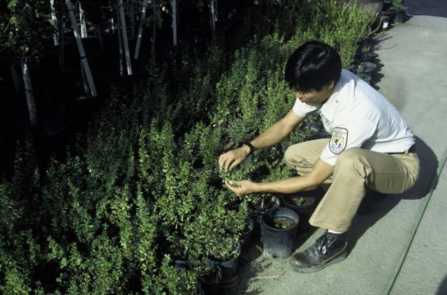 FWS Employee Inspects Plant Growth Picture