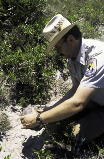 FWS Employee with Gopher Tortoise Picture