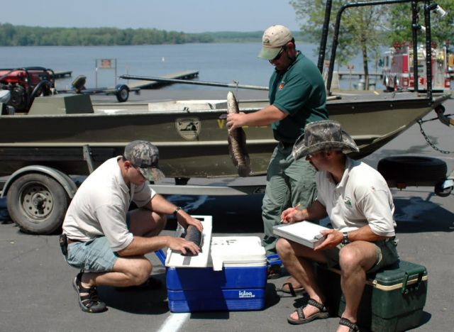 Northern Snakehead Fish Survey Picture