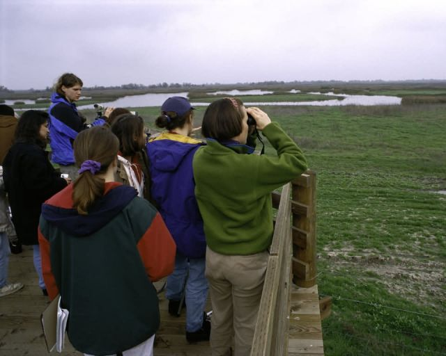 Bird Watching at San Luis NWR Picture