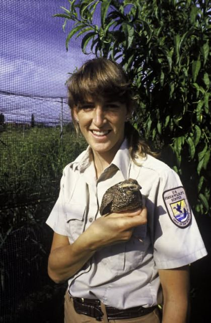 FWS Employee with Masked Bobwhite Quail Picture