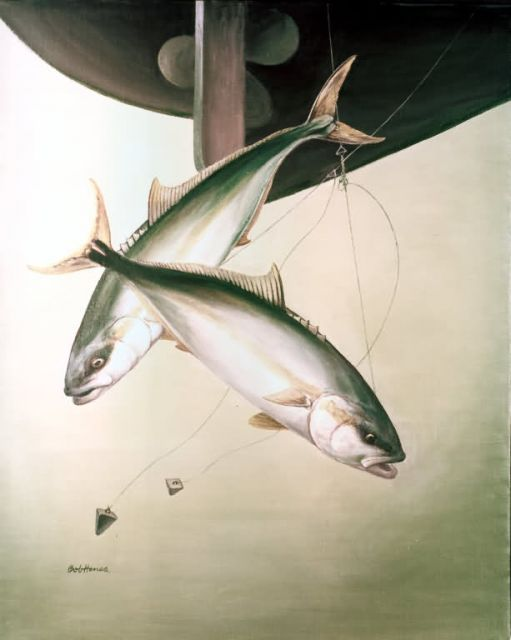 Yellowtail Picture