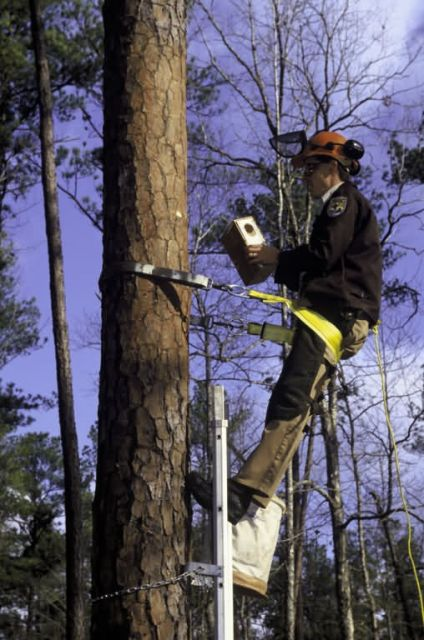 Biologist working on Red Cockaded Woodpecker Nest Box Picture