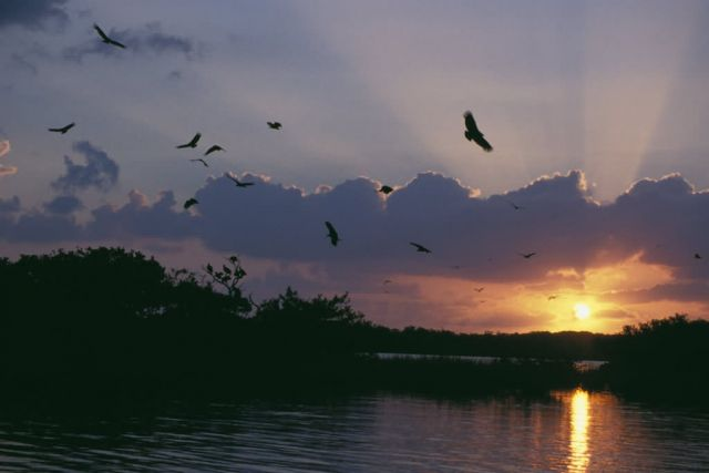 Sunrise over Pelican Island NWR Picture