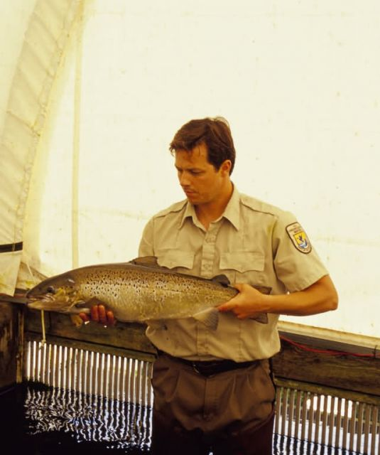 Nashua Hatchery Employee with Atlantic Salmon Picture