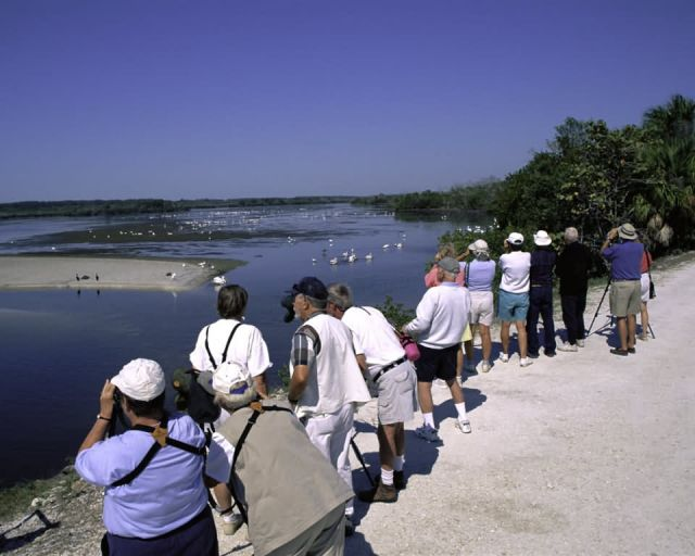 Bird Watching at Ding Darling NWR Picture