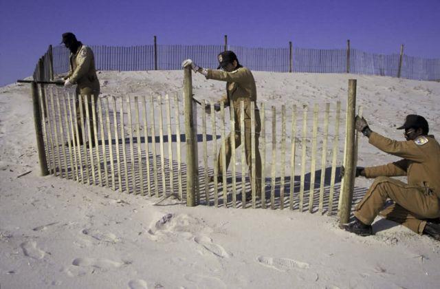 Dune Stabilization Picture
