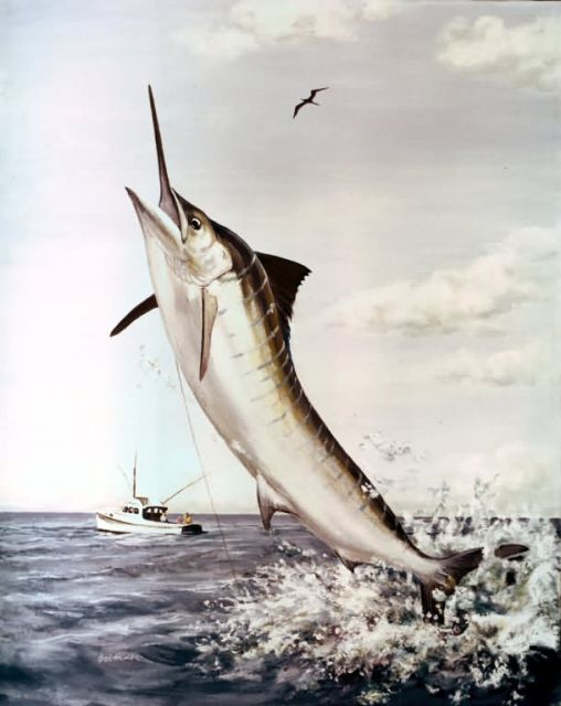 Striped Marlin Picture