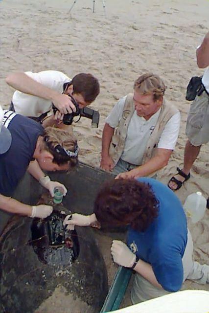 Loggerhead Sea Turtle Satellite Tracking Picture