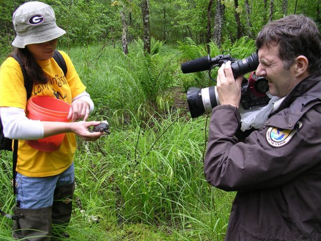 Mike Hobbs, Public Affairs Specialist films bog turtle release Picture