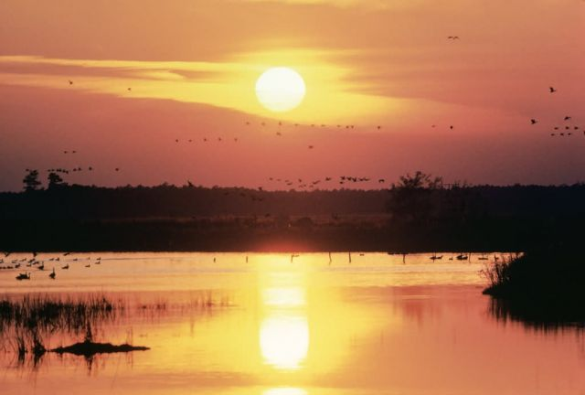 WO1655 Sunset at Blackwater NWR Picture