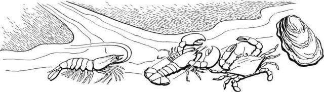 Shellfish Picture
