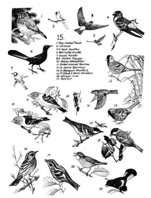 Birds 15 Picture