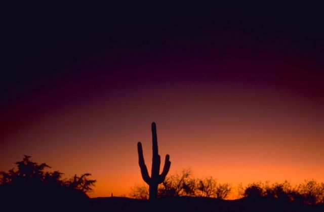 Sabino Canyon Arizona Sunset Picture