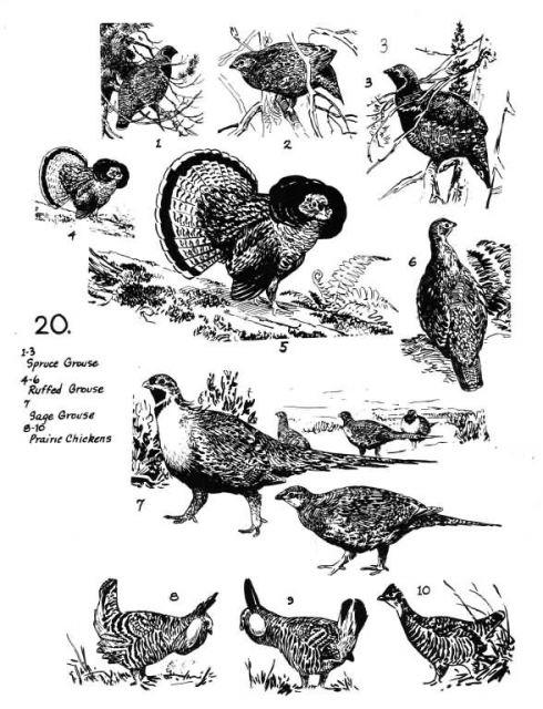 Birds 20 Picture