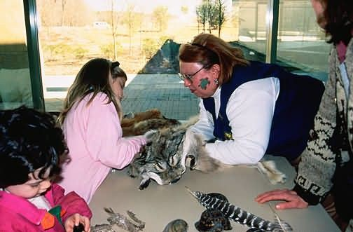 Touch Wildlife at Patuxent Wildlife Visitor Center Picture