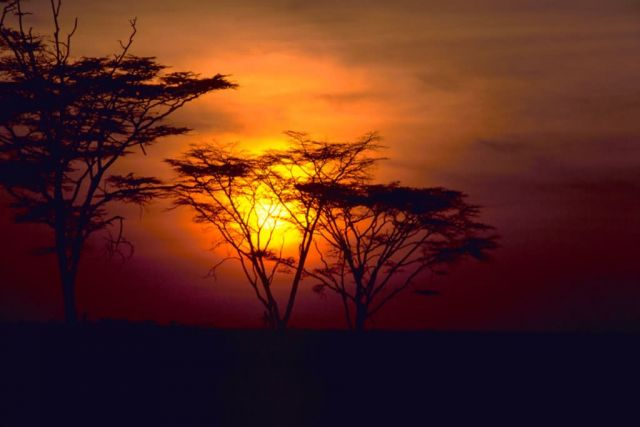 African Sunset Picture