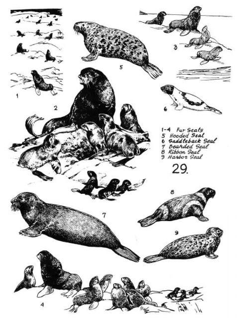 Marine Mammals 29 Picture