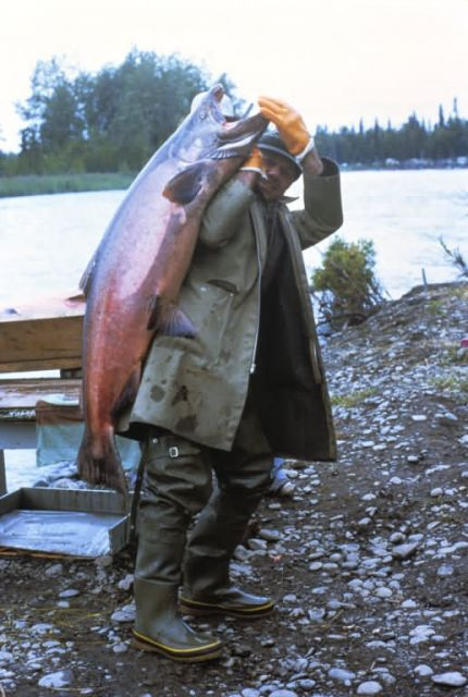 WO 3780 King Salmon Picture