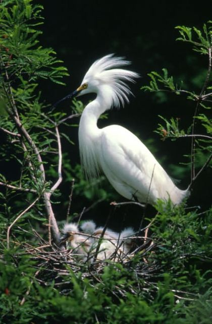 Egret Picture