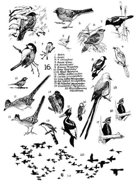Birds 16 Picture