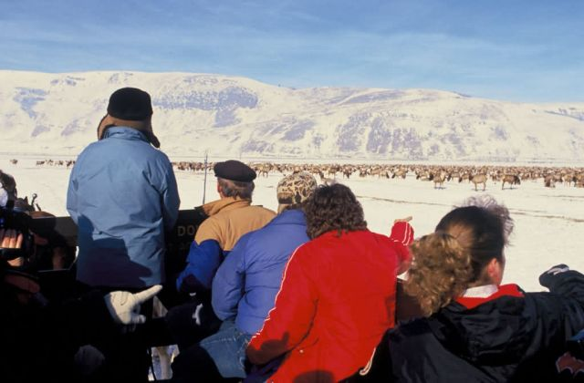 Winter Elk viewing from the sleigh ride Picture