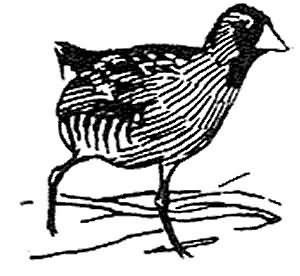 Sora Rail Picture