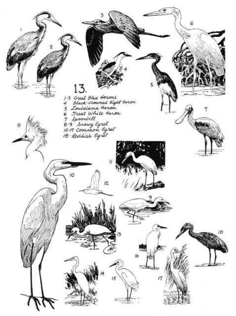 Birds 13 Picture