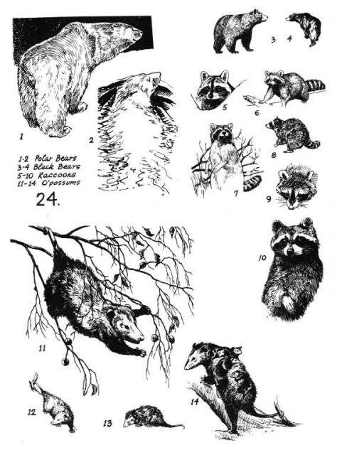 Mammals 24 Picture