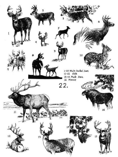 Mammals 22 Picture