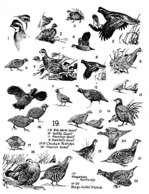 Birds 19 Picture