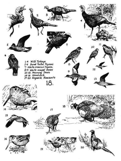 Birds 18 Picture